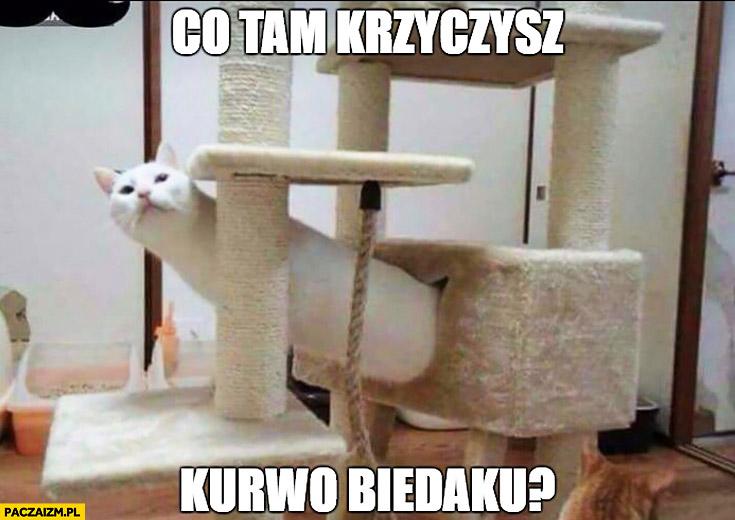 Co tam krzyczysz kurno biedaku? Kot