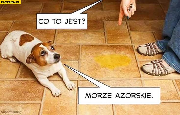 Co to jest? Morze Azorskie pies nasikał na podłodze Azowskie