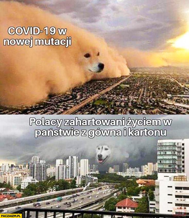 Covid 19 w nowej mutacji vs Polacy zahartowani życiem w państwie z gówna i kartonu