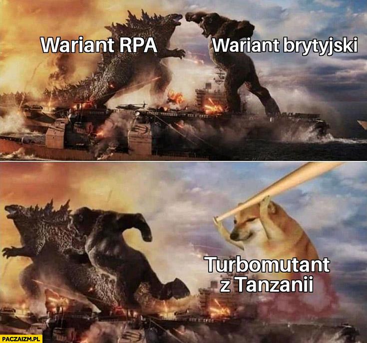 Covid koronawirus wariant RPA vs brytyjski turbomutant z Tanzanii pies pieseł doge