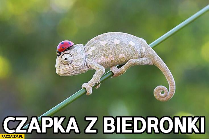 Czapka z biedronki kameleon z biedronką na głowie