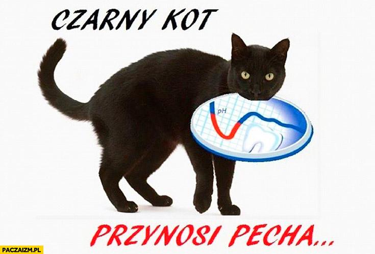 Czarny kot przynosi pecha ph