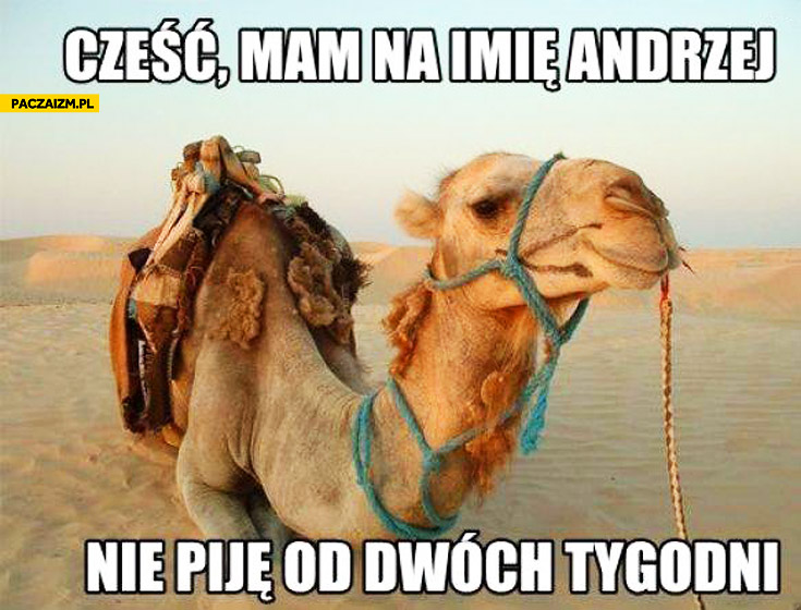Cześć mam na imię Andrzej nie piję od dwóch tygodni wielbłąd