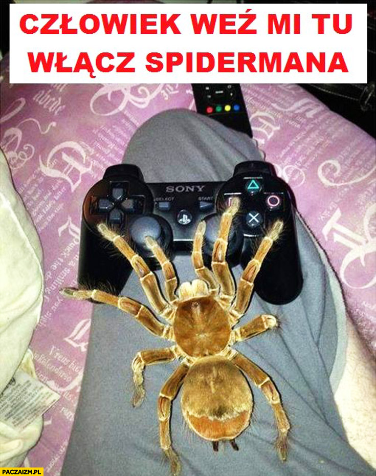 Człowiek weź mi tu włącz Spidermana wielki pająk pad PlayStation