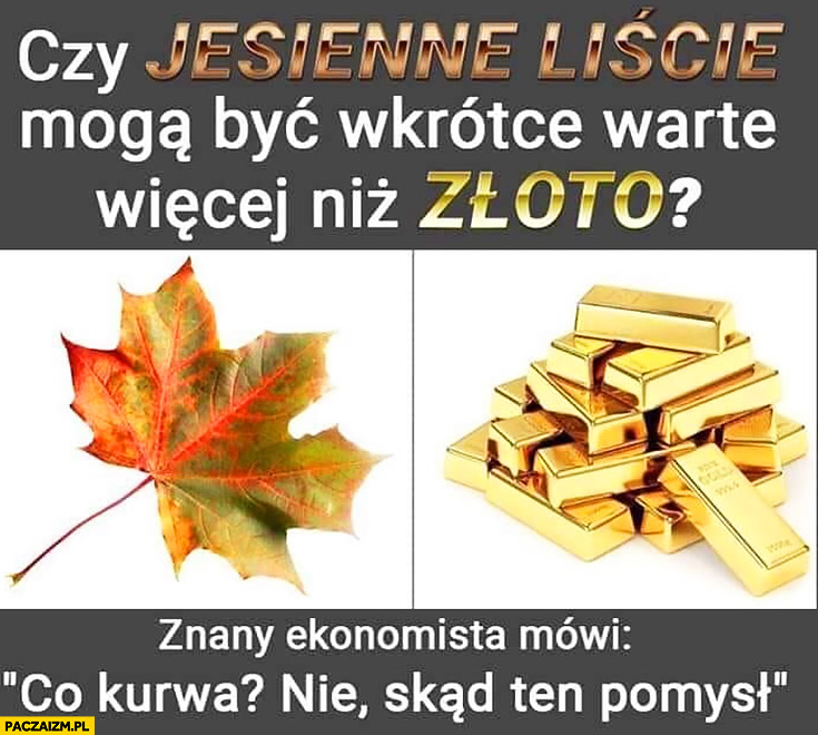 Czy jesienne liście mogą być wkrótce warte więcej niż złoto? Znany ekonomista mówi: co kurna nie skąd ten pomysł?