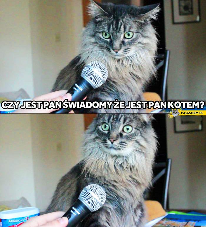 Czy jest Pan świadomy, że jest Pan kotem?