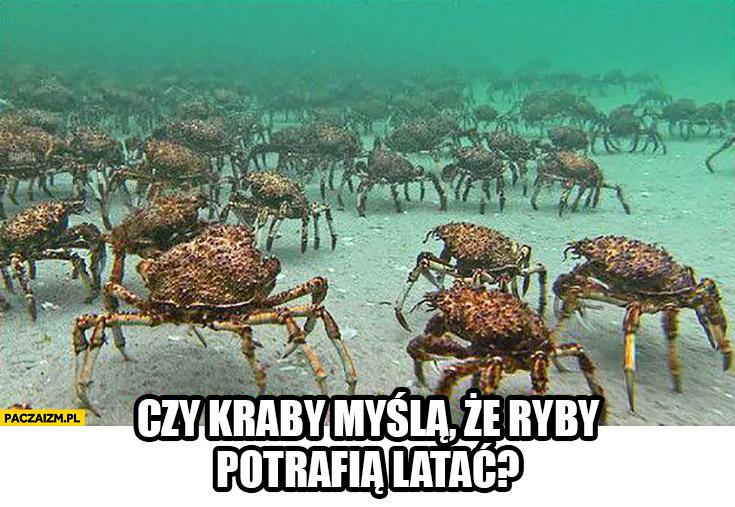 Czy kraby myślą, że ryby potrafią latać?