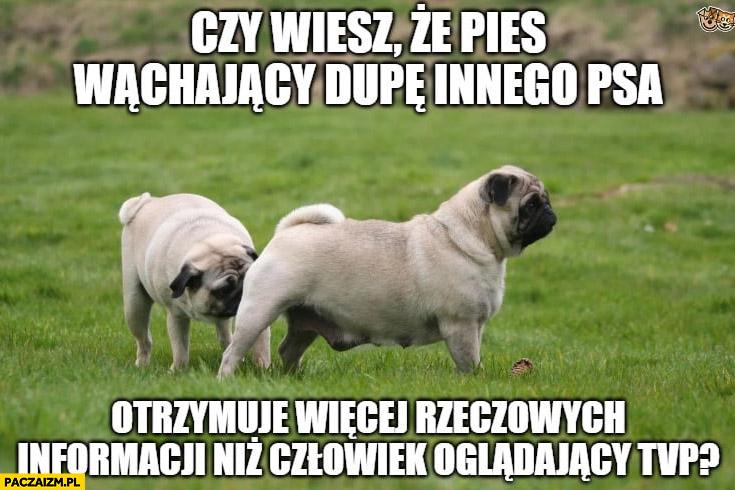 Czy wiesz, że pies wąchający dupę innego psa otrzymuje więcej rzeczowych informacji niż człowiek oglądający TVP