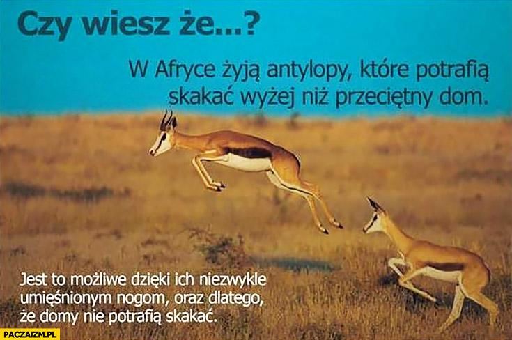 Czy wiesz, że w Afryce żyją antylopy które potrafią skakać wyżej niż przeciętny dom? Dlatego, że domy nie potrafią skakać