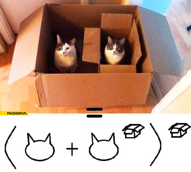 Czysta matematyka koty w pudełku