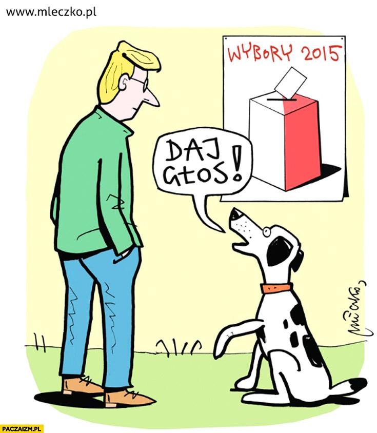 Daj głos wybory pies