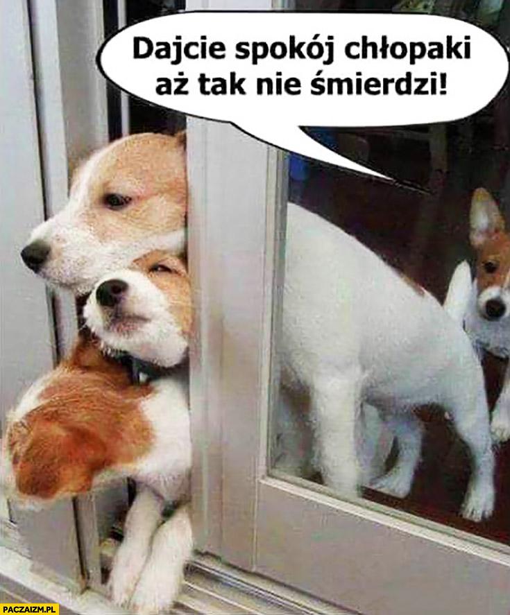 Dajcie spokój chłopaki aż tak nie śmierdzi pies puścił bąka szczeniaczki do okna powietrza