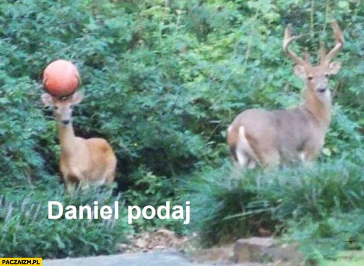 Daniel podaj jeleń łoś z piłką do koszykówki na rogach