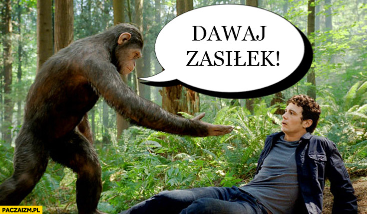 Dawaj zasiłek małpa