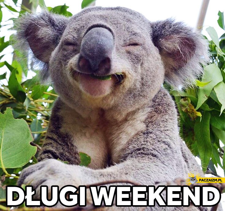 Długi weekend koala
