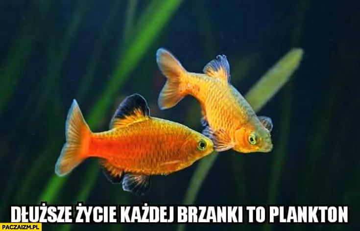 Dłuższe życie każdej brzanki to plankton ryby rybki Calgon