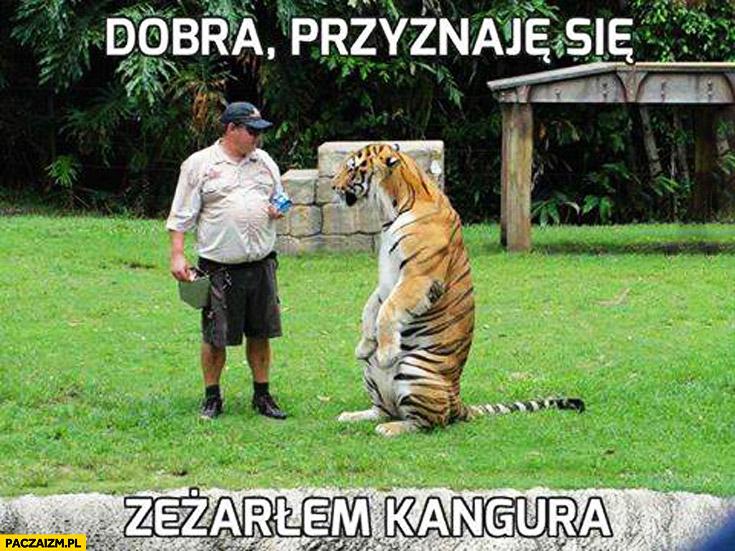 Dobra przyznaję się zeżarłem kangura tygrys