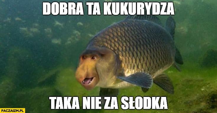 Dobra ta kukurydza, taka nie za słodka ryba typowy Polak nosacz małpa