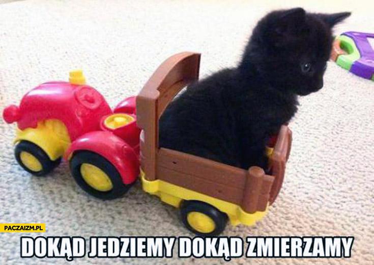 Dokąd jedziemy dokąd zmierzamy kotek na zabawkowym wózku
