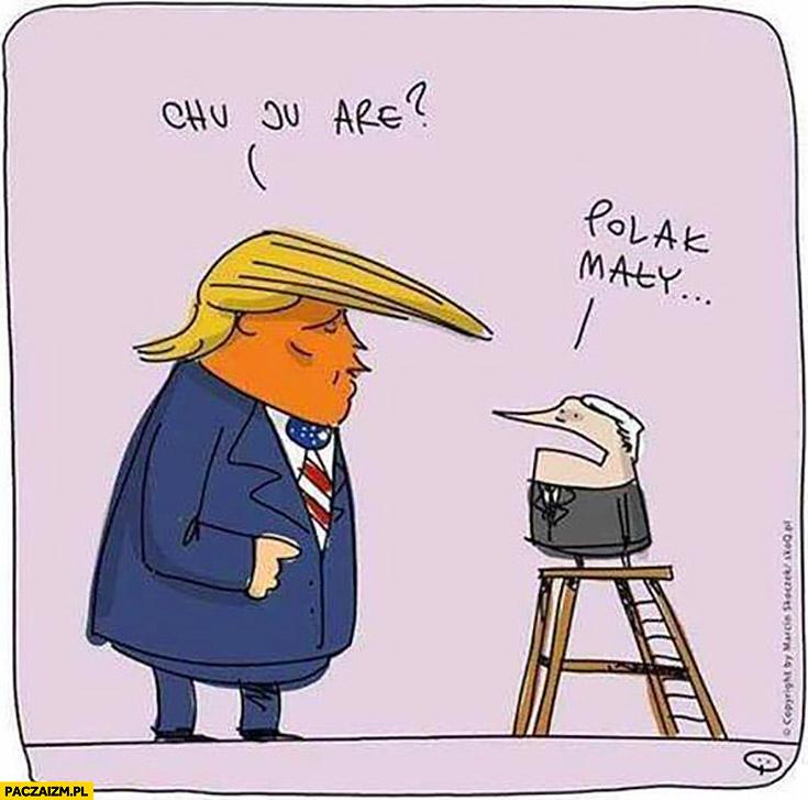 Donald Trump chu ju are? Polak mały Kaczyński na drabince stołku taborecie