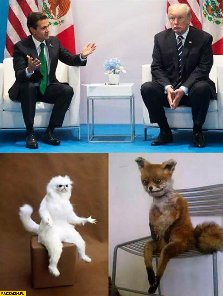 Donald Trump siedzi na krześle fotelu jak lis lisek