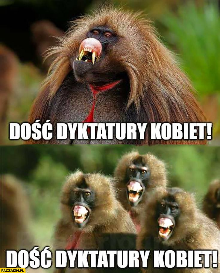 Dość dyktatury kobiet małpy krzyczą Scheuring-Wielgus