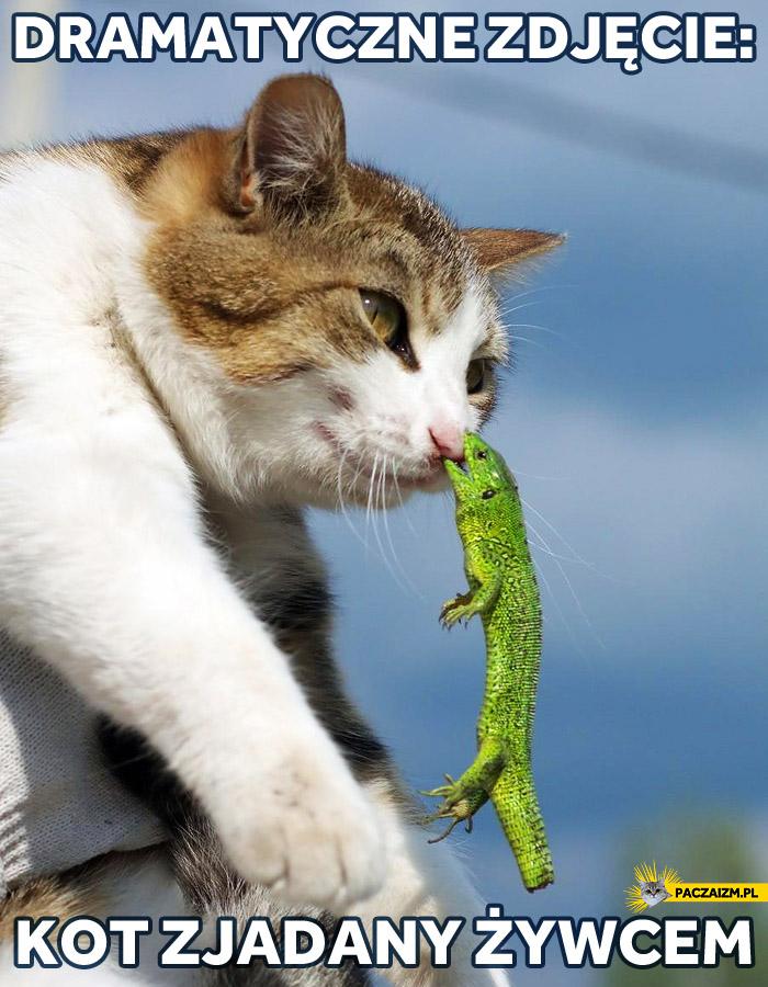Dramatyczne zdjęcie: kot zjadany żywcem