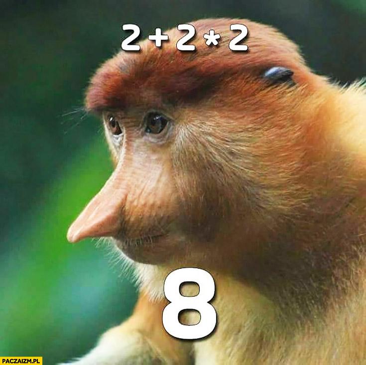 Dwa plus dwa razy dwa równa się osiem 2 + 2 * 2 = 8 typowy Polak nosacz małpa