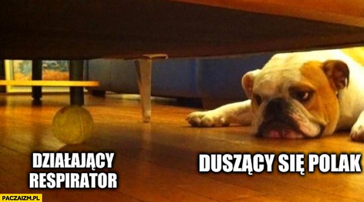 Działający respirator vs duszący się Polak pies patrzy na piłkę pod łóżkiem