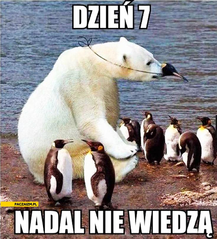 Dzień 7 nadal nie wiedzą niedźwiedź miś polarny przebrany za pingwina
