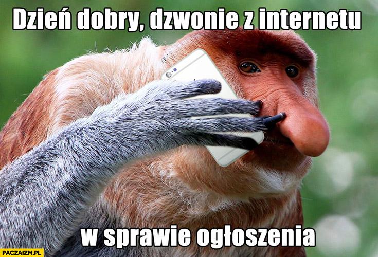 Dzień dobry, dzwonię z internetu w sprawie ogłoszenia typowy Polak nosacz małpa