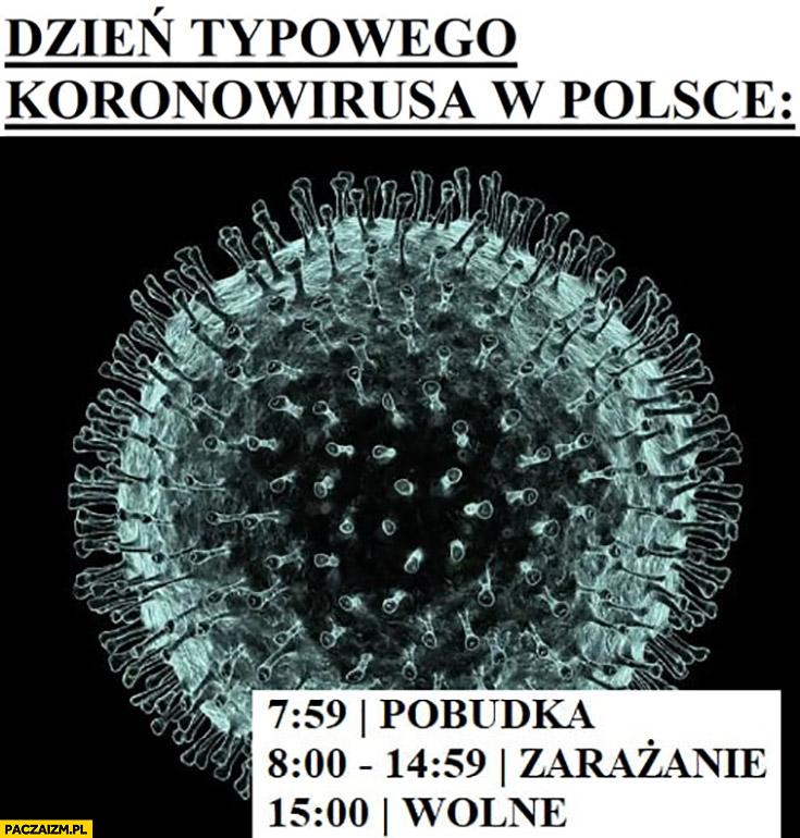 Dzień typowego koronawirusa w Polsce: 8 pobudka potem zarażanie od 15 wolne