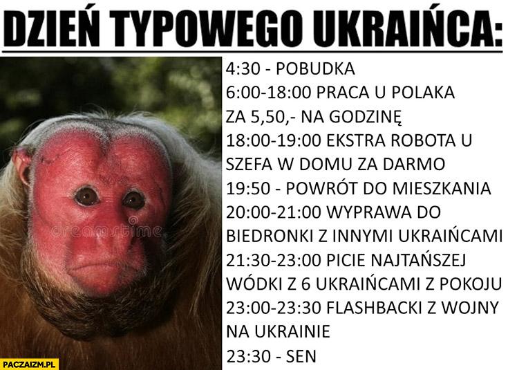 Dzień typowego Ukraińca: pobudka, praca u Polaka, ekstra robota u szefa w domu za darmo, wyprawa do Biedronki picie najtańszej wódki, flashbacki z wojny, sen