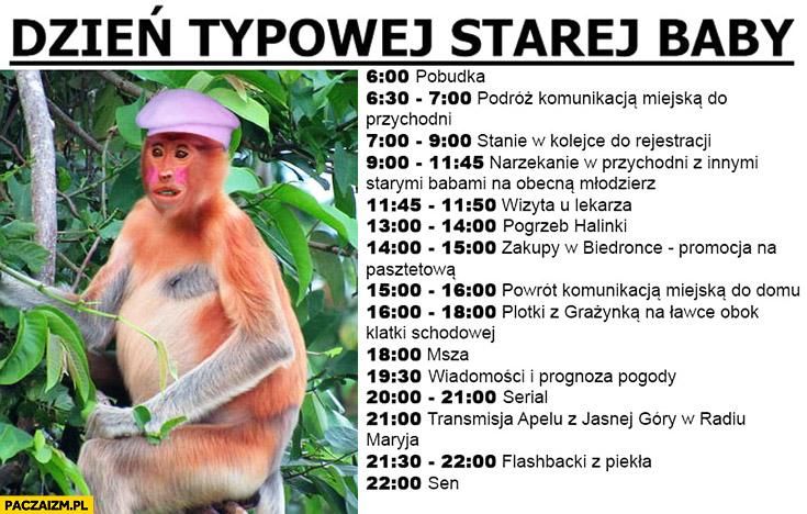 Dzień typowej starej baby Polak małpa nosacz plan dnia