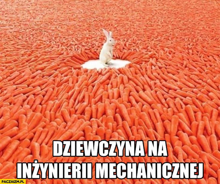 Dziewczyna na inżynierii mechanicznej królik zając dookoła mnóstwo marchewek