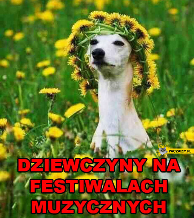 Dziewczyny na festiwalach muzycznych