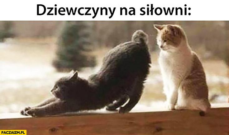 Dziewczyny na siłowni kot przeciąga się
