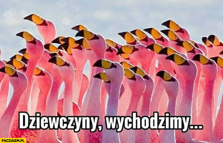 Dziewczyny wychodzimy flamingi