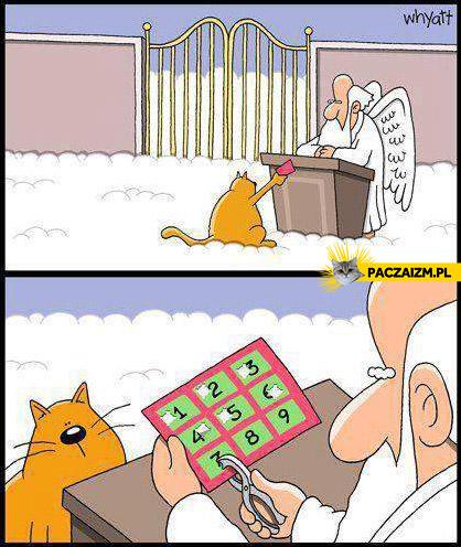 Dziewięć żyć kota