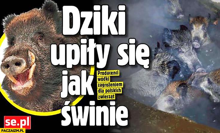 Dziki upiły się jak świnie artykuł Super Express