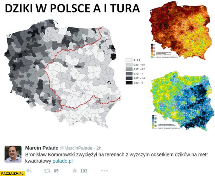 Dziki w Polsce a pierwsza tura Bronisław Komorowski zwyciężył na terenach z wyższym odsetkiem dzików na metr kwadratowy