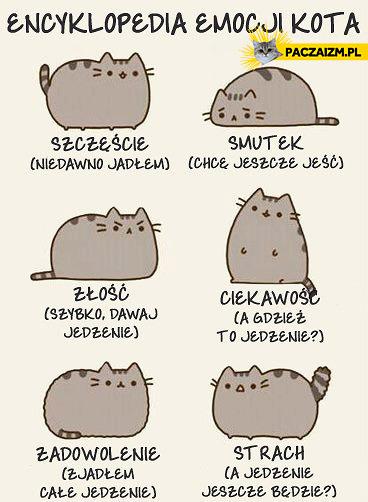 Encyklopedia emocji kota