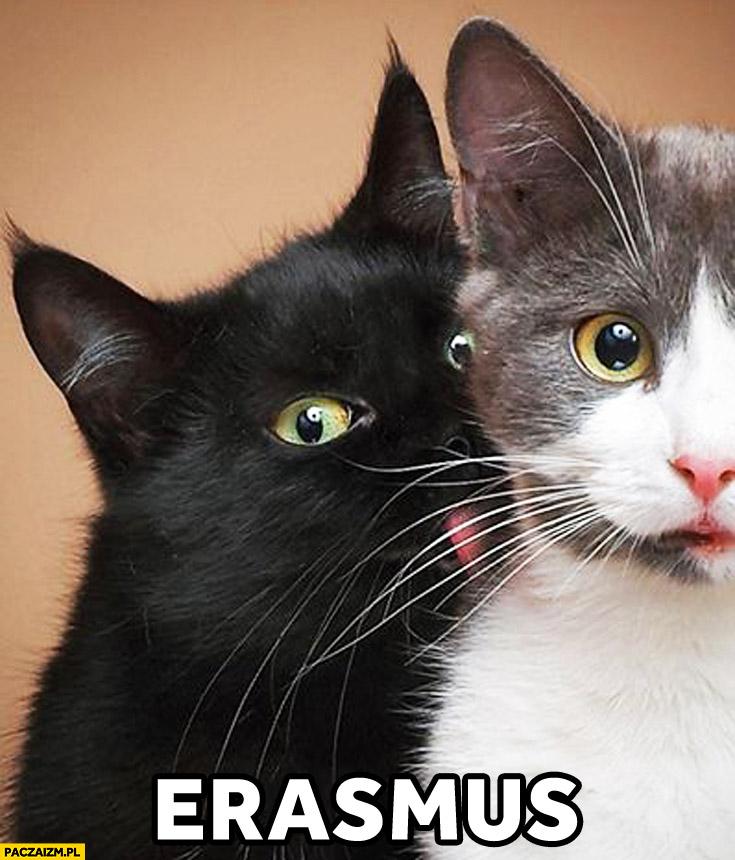 Erasmus czarny kot biała kotka murzyn