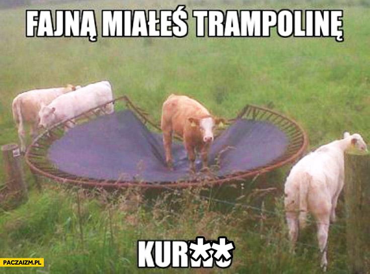 Fajną miałeś trampolinę kurwo krowa