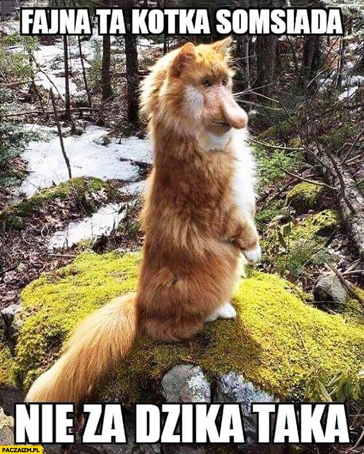 Fajna ta kotka sąsiada, nie za dzika taka kot typowy Polak nosacz małpa