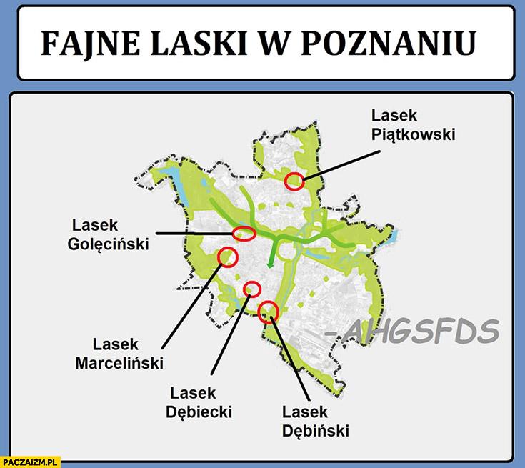 Fajne laski w Poznaniu ahgsfds: Lasek Piątkowski, Goleciński, Marceliński, Dębiecki, Dębiński