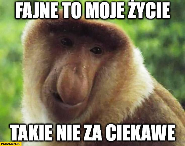 Fajne to moje życie takie nie za ciekawe typowy Polak nosacz małpa