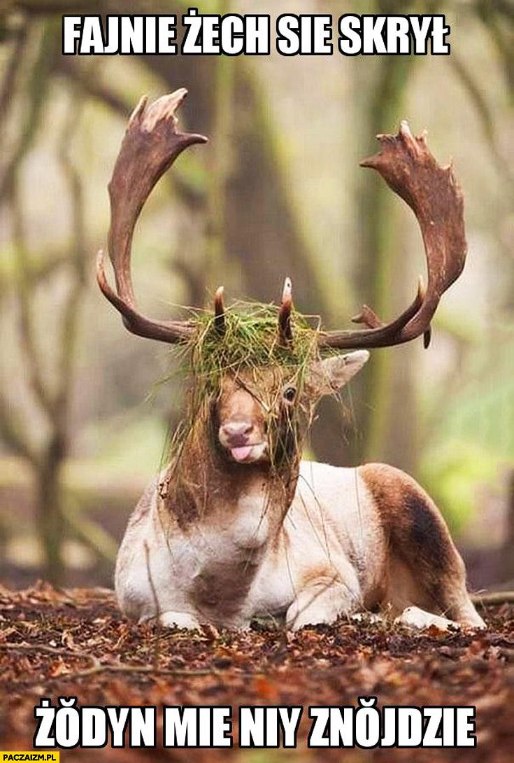 Fajnie żem się skrył żaden mnie nie znajdzie jeleń łoś z trawą na głowie