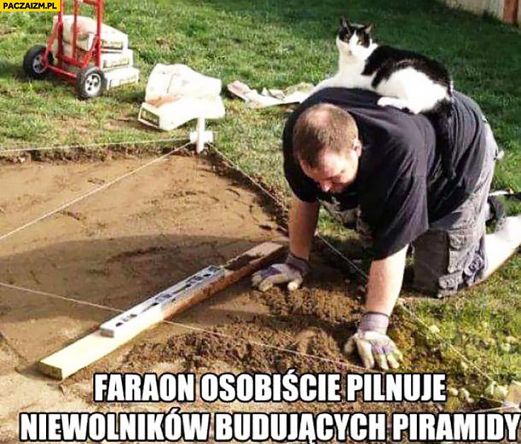 Faraon osobiście pilnuje niewolników budujących piramidy. Kot leży na plecach robotnika