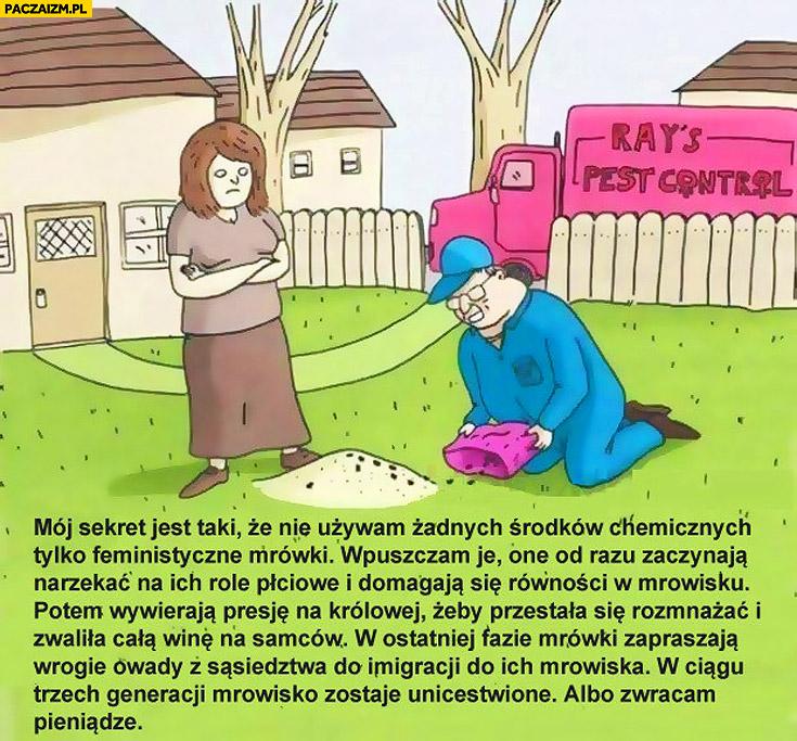 Feministyczne mrówki mrowisko zostaje unicestwione